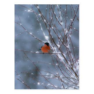 Bouvreuil masculin dans la carte postale de neige