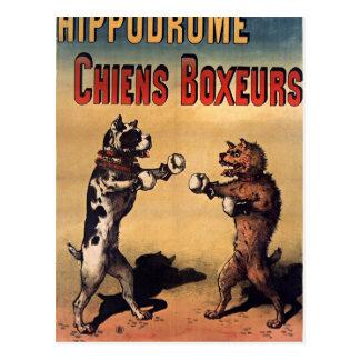 Boxing dogs retro style postcard carte postale