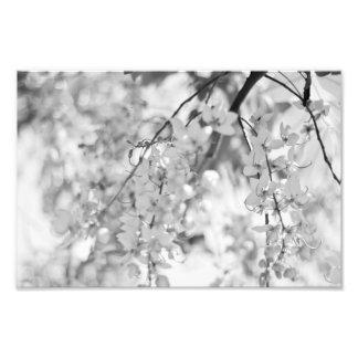 Branche noire et blanche de fleur photo sur toile