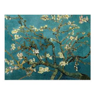 Branches d'amande en fleur carte postale