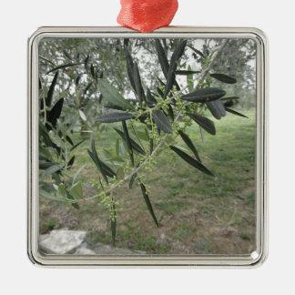 Branches d'olivier avec les premiers bourgeons. La Ornement Carré Argenté