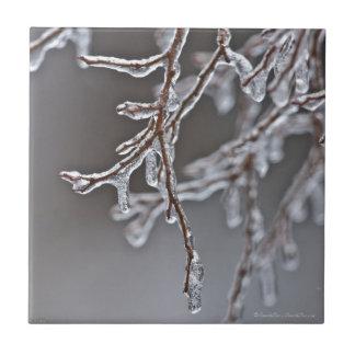 Branches posées de glace sur la traînée carreau en céramique