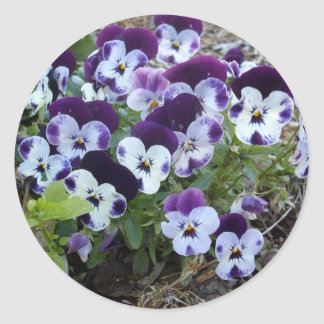 Bright_Purple_And_White_Pansies, _ Sticker Rond