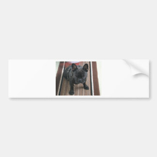 Brindle_French_Bulldog sitting.png Autocollant De Voiture