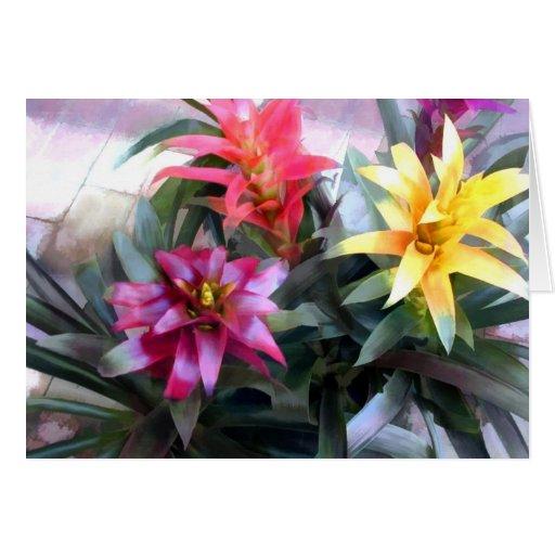 Bromeliads mélangé exotique carte de vœux