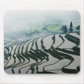 Brouillard de matin au-dessus des gisements de riz tapis de souris