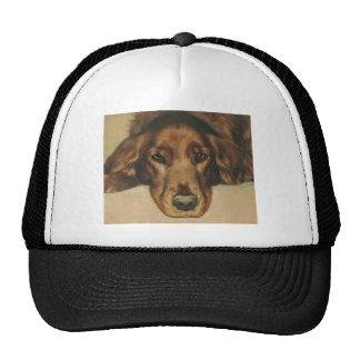 Brown a observé le chien irlandais d'or casquettes