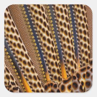 Brown a repéré la plume de faisan sticker carré