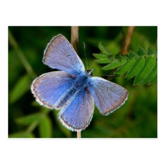 brume bleue velue de papillons cartes postales