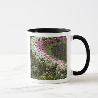 Bruyère de rhododendron (catawbiense de mugs