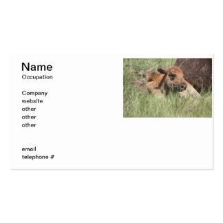 Buffalo de bébé carte de visite standard