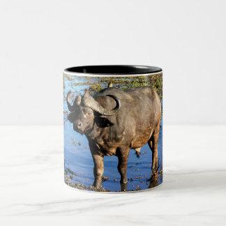 Buffalo de cap par le © de Rowood Tasse