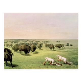 Buffalo de chasse camouflé carte postale