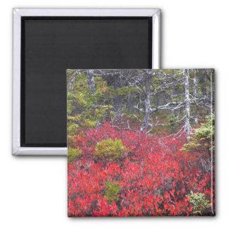 Buissons et pins de myrtille magnet carré