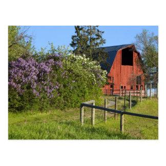 Buissons lilas en fleur et pies dans les arbres carte postale