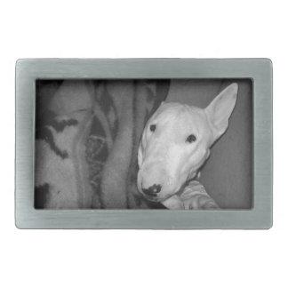 Bull-terrier anglais blotti sous une couverture - boucles de ceinture rectangulaires