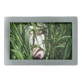 Bull-terrier anglais se cachant dans l'herbe boucles de ceinture rectangulaires