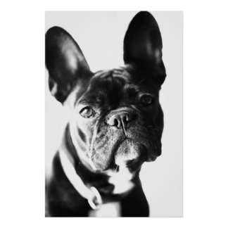 Bulldogg français posters