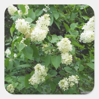 Bush lilas blanc sticker carré