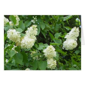 Bush lilas blanc carte de vœux