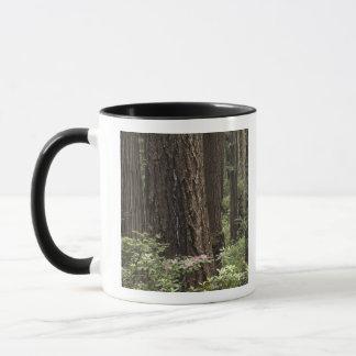 CA, parc d'état de Prairie Creek, côte Mugs