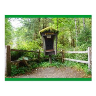 Cabine de téléphone moussue - forêt tropicale de carte postale