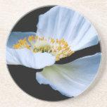 Caboteur de fleur de pavot oriental dessous de verre