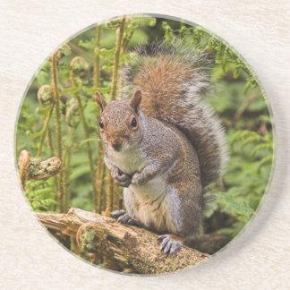 Caboteur gris d'écureuil dessous de verres