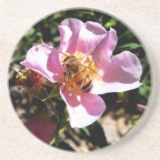 Caboteur - l'abeille sur un sauvage s'est levée dessous de verres