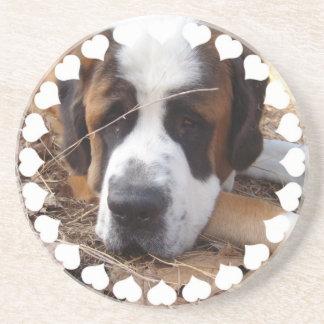 Caboteurs de chien de St Bernard Dessous De Verres