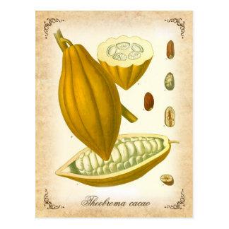 Cacao - illustration vintage carte postale