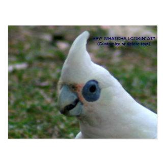 Cacatoès observé par bleu cartes postales