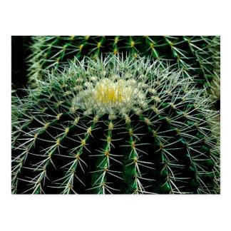 Cactus Cartes Postales