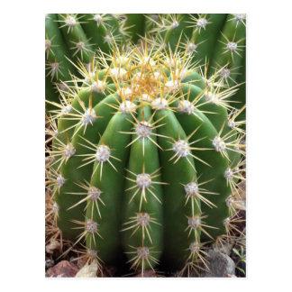 Cactus de l'Arizona Carte Postale