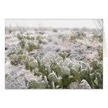 Cactus de neige cartes de vœux