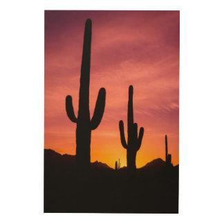 Cactus de Saguaro au lever de soleil, Arizona Impression Sur Bois