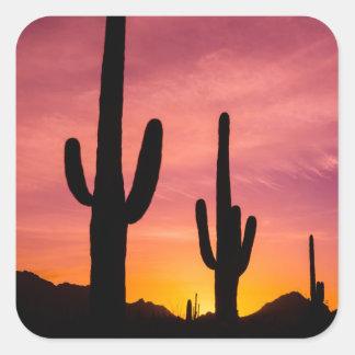 Cactus de Saguaro au lever de soleil, Arizona Sticker Carré