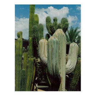 Cactus de sud-ouest carte postale