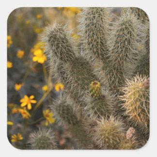cactus et fleurs sauvages sticker carré