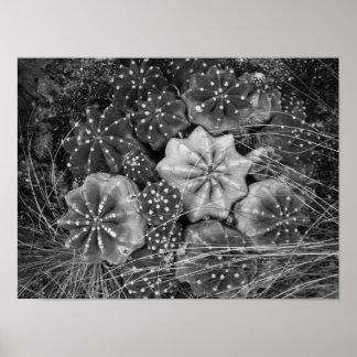 Cactus noir et blanc de photographie posters