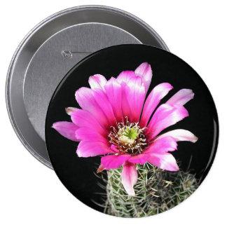 cactus pin's