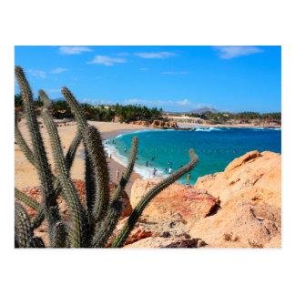 Cactus sur le sommet rocheux au-dessus de la plage carte postale