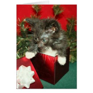 Cadeau de présent de chaton de carte de voeux de