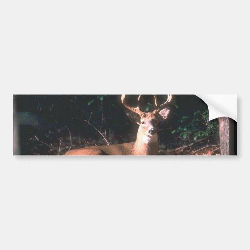 Cadeau populaire de mâle de cerfs communs de White Adhésif Pour Voiture
