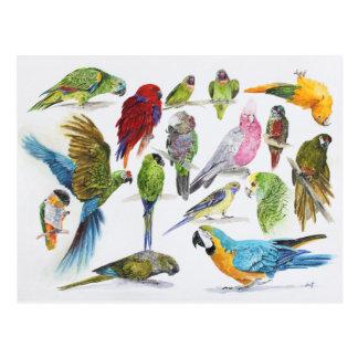 Cadeau pour des amants de perroquet partout cartes postales