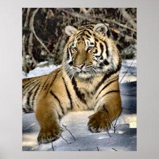 Cadeaux d'art d'amants de tigre affiches