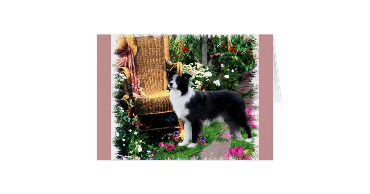 cadeaux d 39 art de border collie carte de v ux zazzle. Black Bedroom Furniture Sets. Home Design Ideas