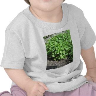 CADEAUX de CherryHill NVN677 de paysage de vert T-shirt