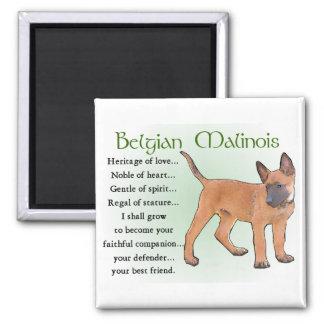 Cadeaux de Malinois de Belge Magnet Carré