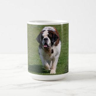 Café de photo de chien de St Bernard beau, tasse